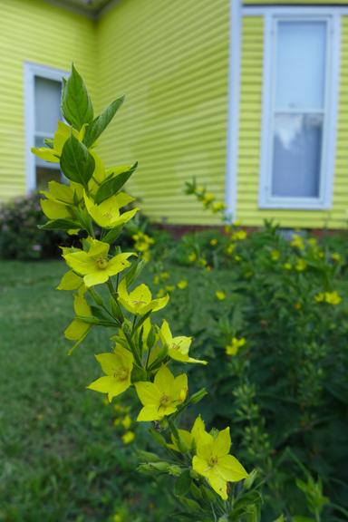 matching yellows