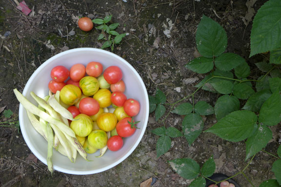 August tomato bowl