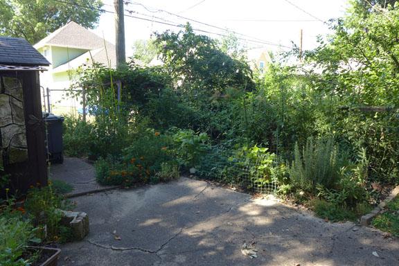 my garden August 2013
