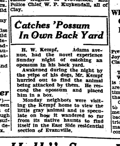 catches possum
