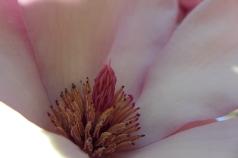Magnolia Near