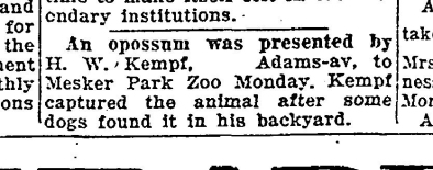 possum presented to zoo