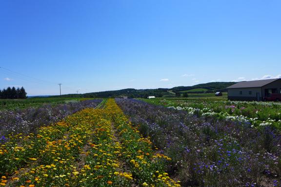 Flower Field on a hill
