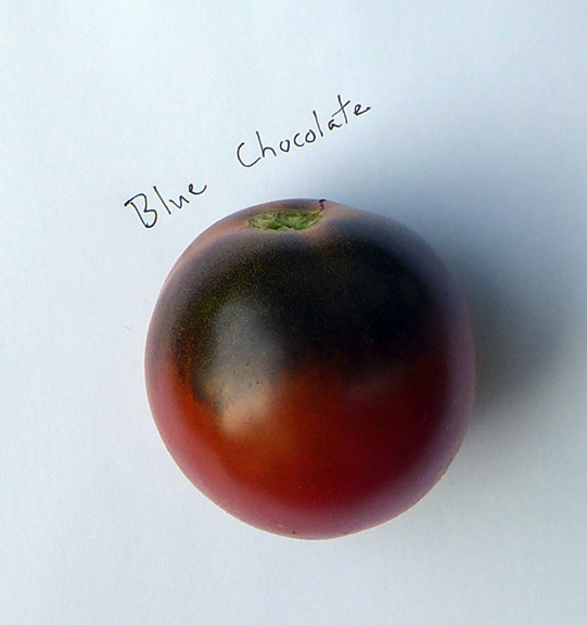 Blue Chocolate