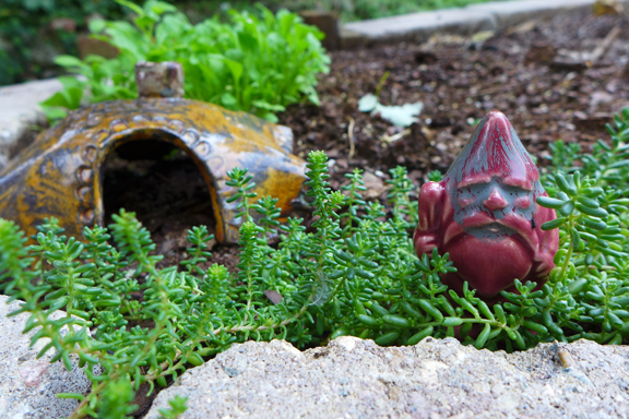 Gnomey Gift from the Universe