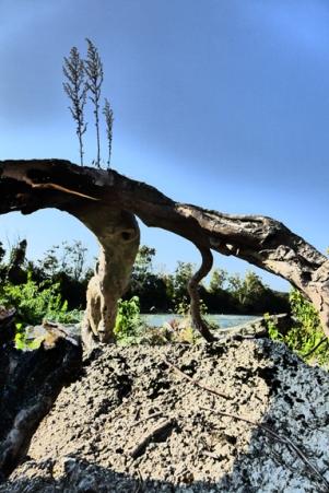 driftwood weeds