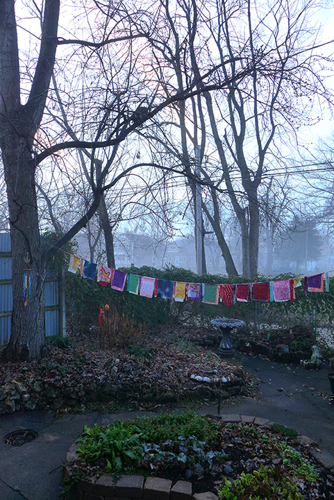 foggy winter garden