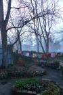 foggy winter garden