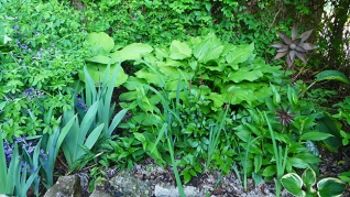 more plant mass
