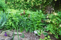 plant mass