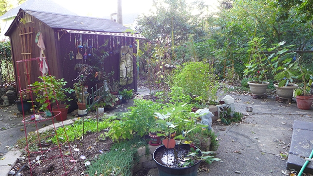 full garden in October