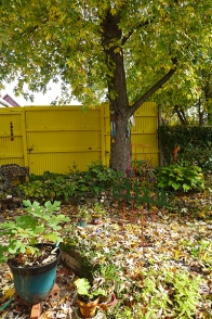 yellow leaves and yellow wall