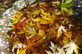 leaf stream