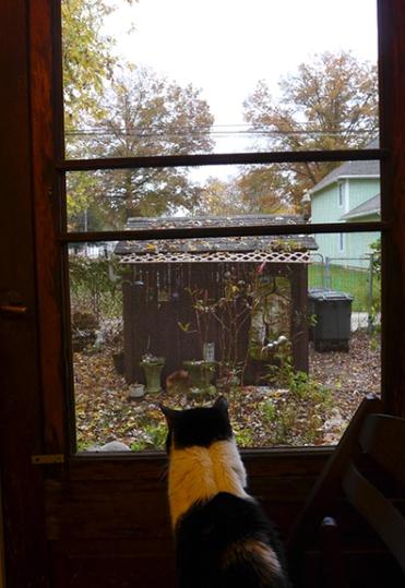 Shamoo enjoying the view