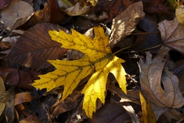photogenic leaf