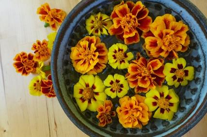 gathering marigolds