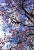 magnolia 10