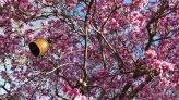 magnolia 27