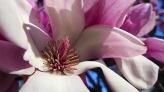magnolia 28