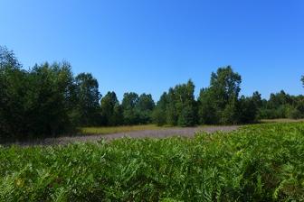 hiking near Conway