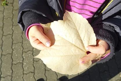 a rare white leaf