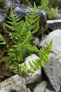 ferns on a faux mountain
