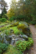 mossy mountain