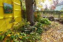 Garden 11/18