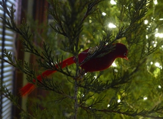 my grandma's fancy red bird