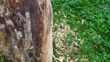 wood and splinters