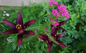lilies and yarrow