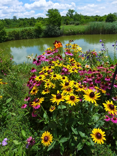 More Pond