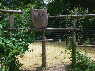 Owl on Chicken Fence
