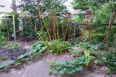 squash patch expanding July 4