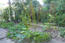 squash patch July 22
