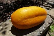 big ol' cucumber