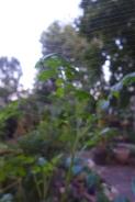 garden abstract