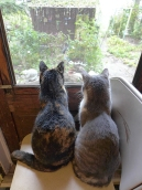 The Ladies in their Window