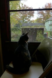 Lady Morgaine watching leaves