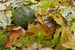 glass ball among the leaves