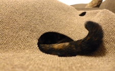 tail hole in the Ripple Rug