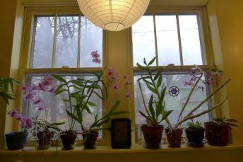 window sill full of orchids