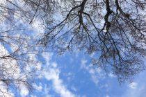 blue sky and magnolia buds