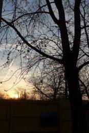 sunrise behind the budding maple