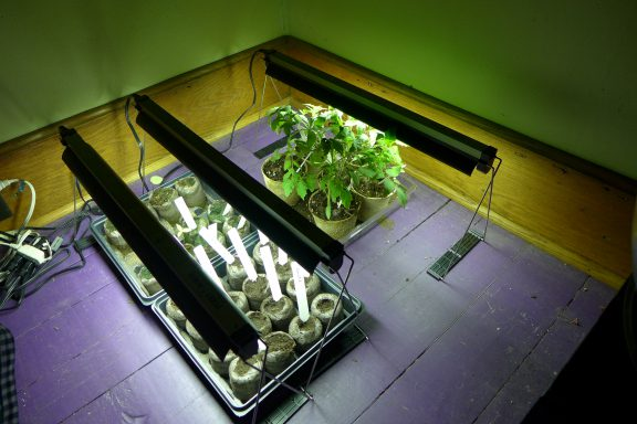 my grow light setup