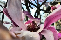 magnolia taken with filter