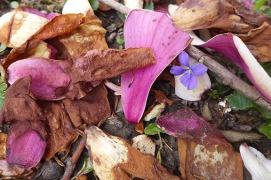 violet and magnolia petals