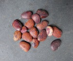 Jackson Wonder Lima Beans