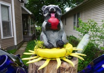 sedums at the raccoon's base