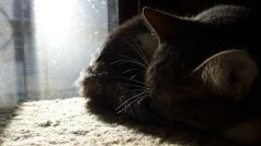 Ygraine asleep in the sunlight